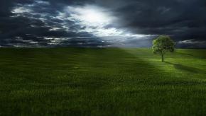 tree-736888_640.jpg